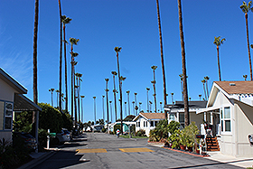 PALM-LINED STREETS